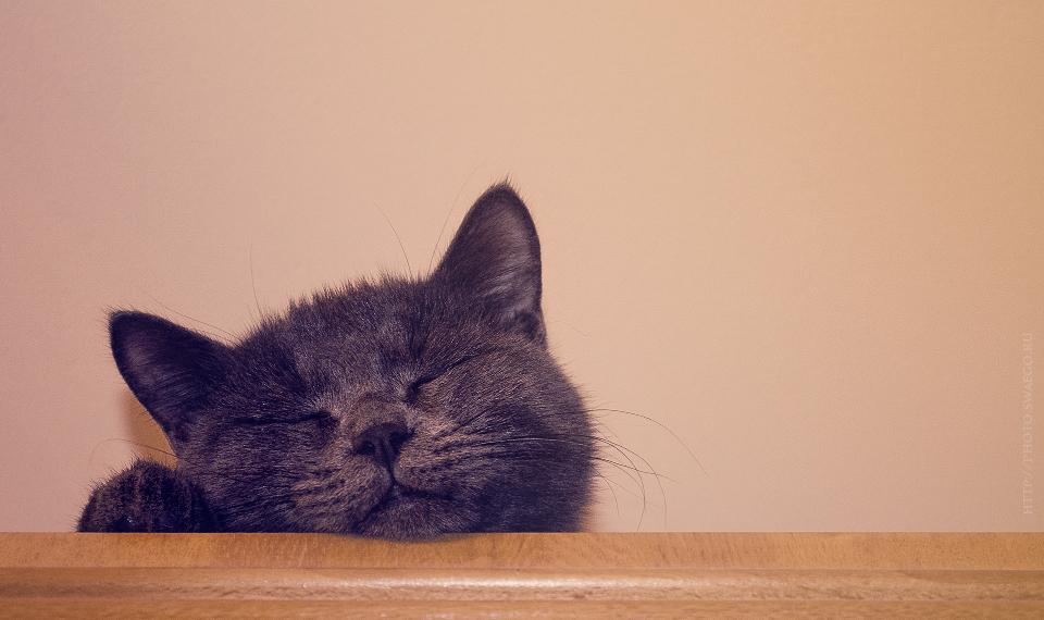 Ванильный кот