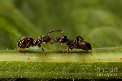 ants communicating with each other