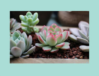 Paypal cash giveaway succulent