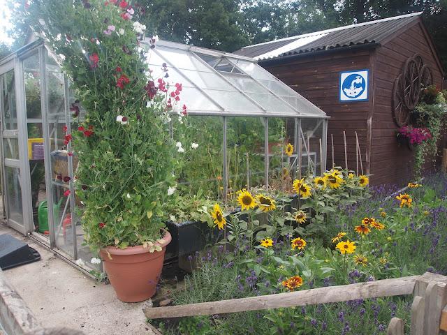 Godstone Farm, Surrey Review - potting shed/greenhouse