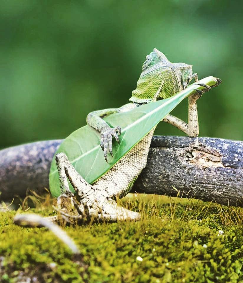 Sad Wallpapers Lizard Sitting Alone Guitar