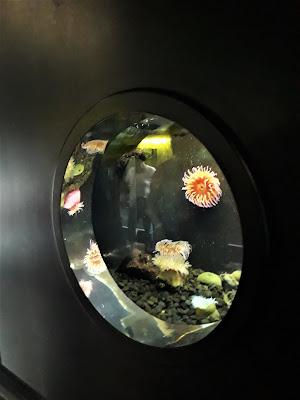 Cote opale road trip nausicaa