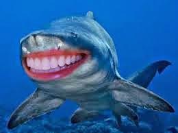 Download 83+ Gambar Ikan Hiu Lucu Terpopuler