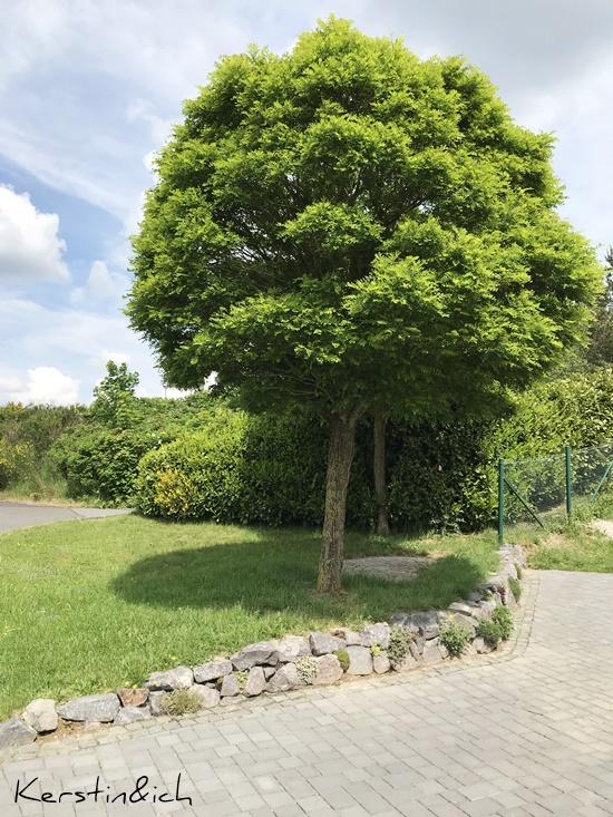 Steine Mauer Garten