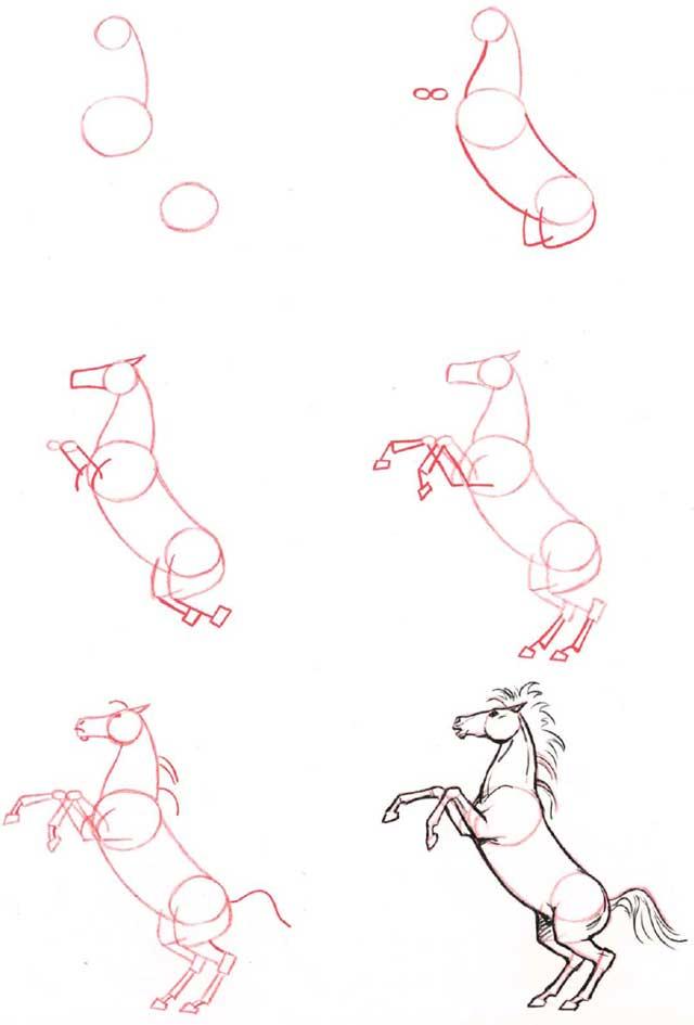 Come Costruire Un Cavallo.Corso Di Grafica E Disegno Per Imparare A Disegnare Imparare A