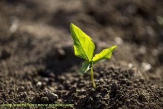 Kelestarian Tanah (Land Conservation)