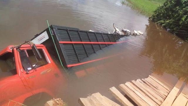 Caminhão carregando 20 cabeças de gado cai em rio após ponte quebrar e gado morre agonizando afogado!