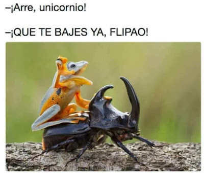 Arre , unicornio, que te bajes ya, flipao , rana, escarabajo rinoceronte