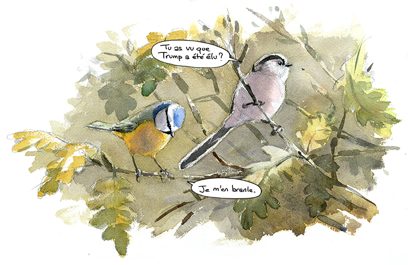 Mésange bleue, mésange à longue queue, aquarelle, élection de Trump.