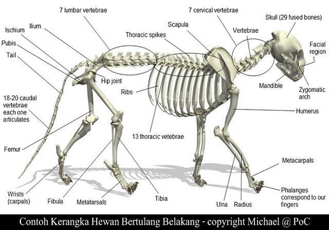 Vertebrata Adalah Subfilum Dari Hewan - Hewan Yang Memiliki Tulang Belakang. Penjelasannya...