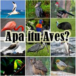 Pengertian Aves