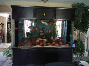 Giant Aquariums: Acrylic 600 Gallon Aquarium   $6000 (Charlotte)