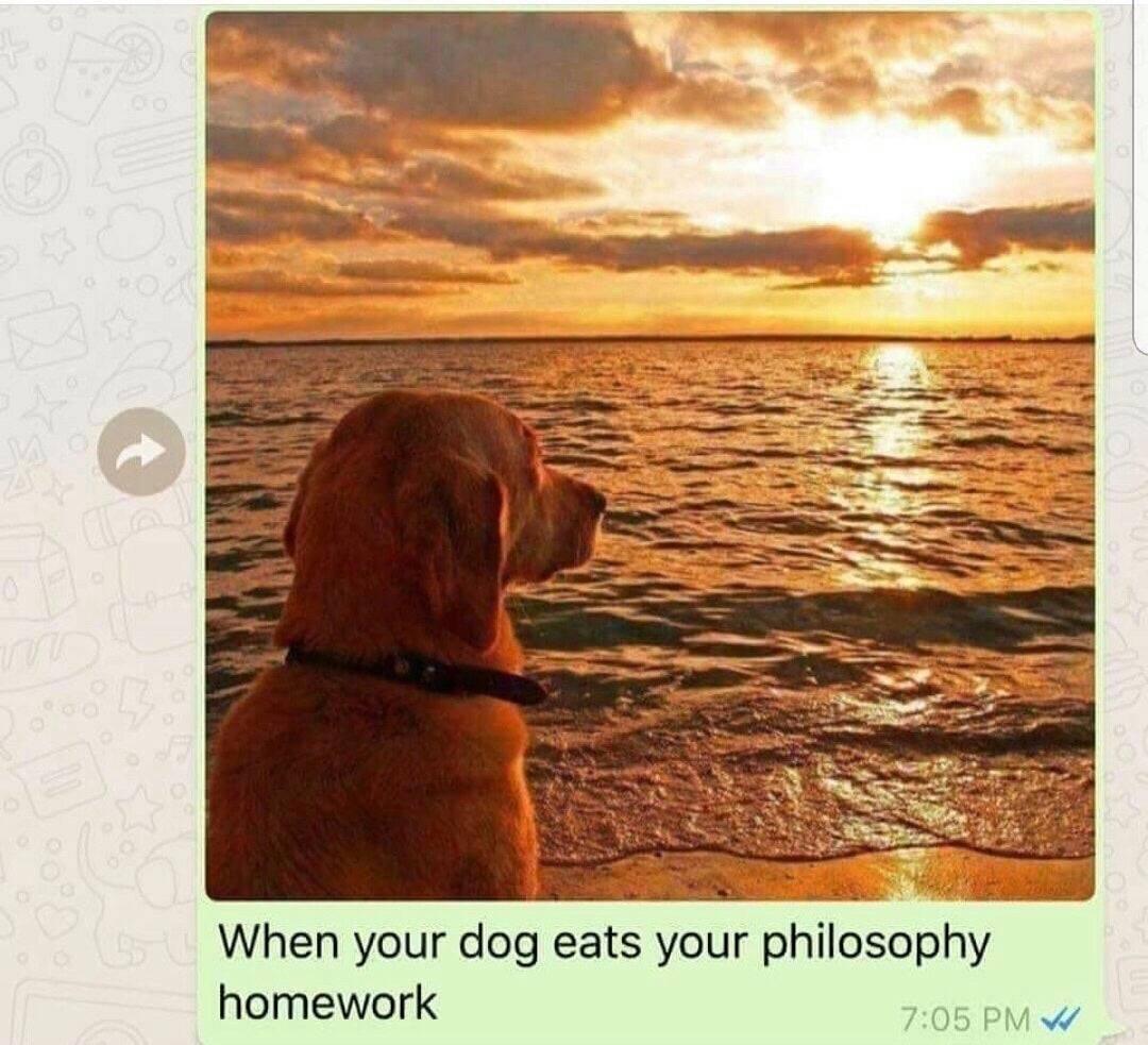 Dog Eats P