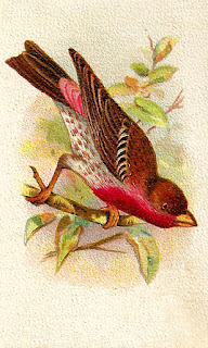 bird finch artwork illustration digital clipart download