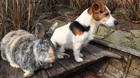 persahabatan antara kelinci dan anjing berasal dari jerman