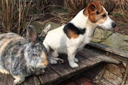 kisah Kelinci dan Anjing jerman yang Menjadi sahabat Baik