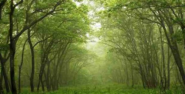 Penggolongan Tumbuhan Berdasarkan Biji, Akar dan Daun