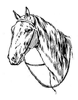 horse digital illustration image