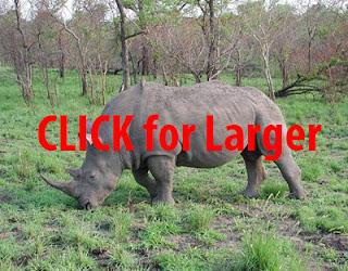 http://lh3.ggpht.com/-iqwyAfT4Udg/VNKxQ-L9icI/AAAAAAAAK0U/jFGfZfftNKQ/s1600-h/Black_Rhinoceros%25255B7%25255D.jpg