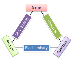 What is Molecular Biology? - Molecular Biology Blog on