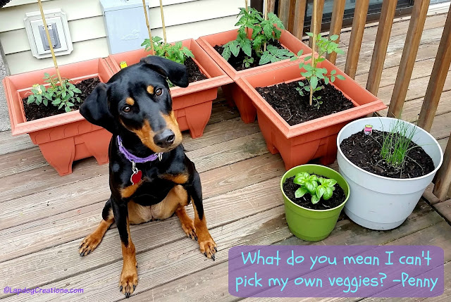 Doberman Mix Puppy with garden