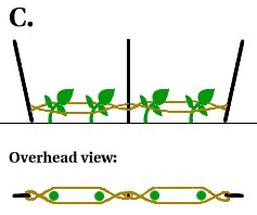 Lean Clean Green Lifestyle: How to Trellis Tomatoes