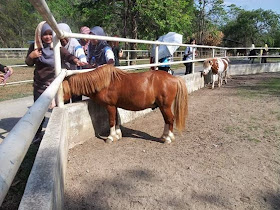 Image result for EQUIN PERLIS