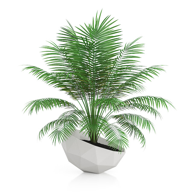 3D model free -  Plants_28