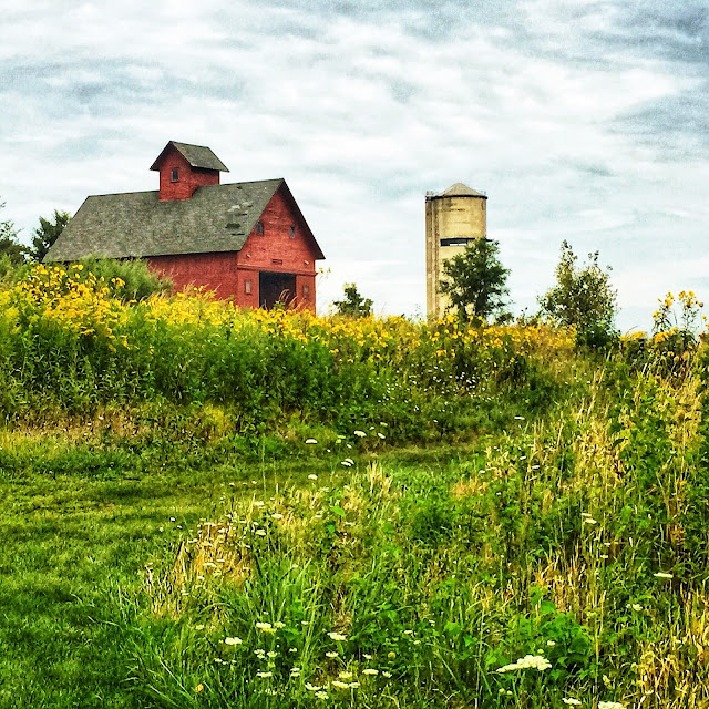 Barn at Peck Farm in Geneva, Illinois surrounded by goldenrod.