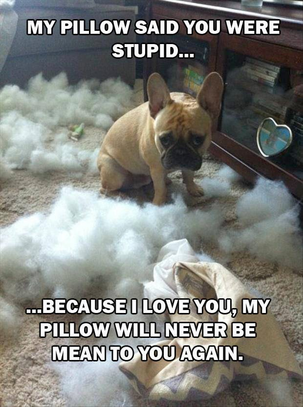 30 Funny animal captions - part 21 (30 pics), captioned animal pictures, puppy destroying pillow