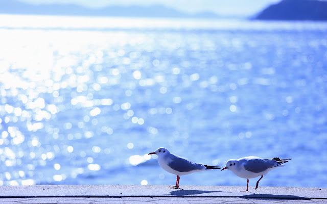 foto vogels meeuwen zee