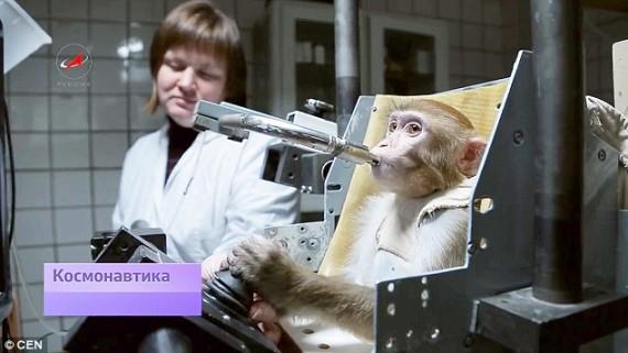 Monyet Akan Mendarat Di Planet Mars