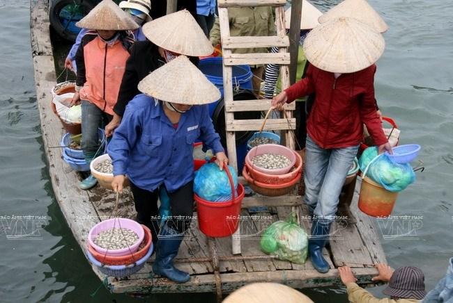 Top 10 Chợ/ Vựa hải sản Quảng Ninh tươi sống đáng để mua