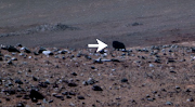 Possible Muskoxen Found On Mars?