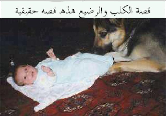 قصة الكلب والرضيع هذه قصه حقيقية