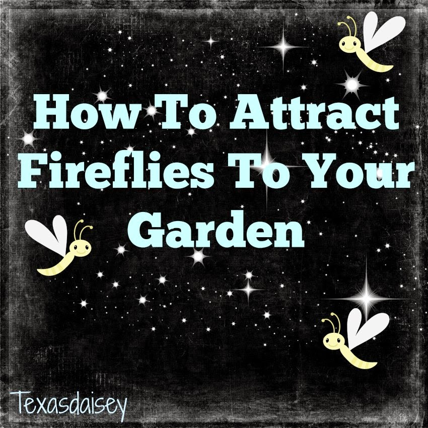 learn the things needed to attract fireflies to your yard or garden