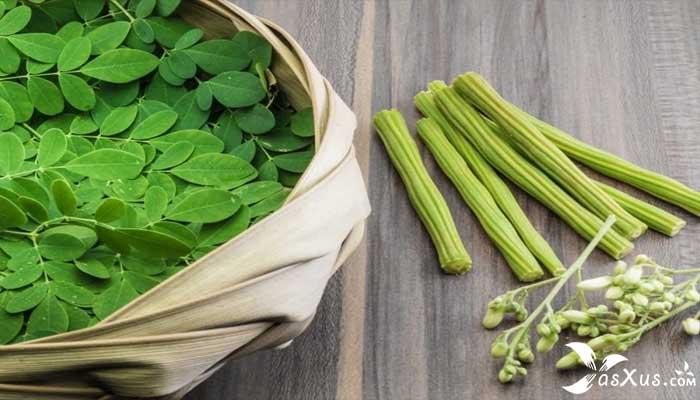 12 Manfaat Daun Kelor Untuk Kesehatan dan Cara Mengolahnya