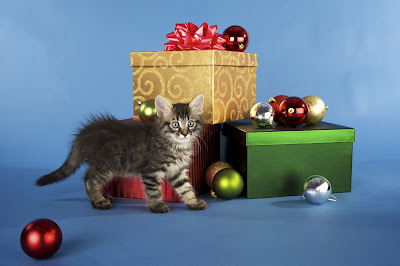 kitten with presents and christmas decorations