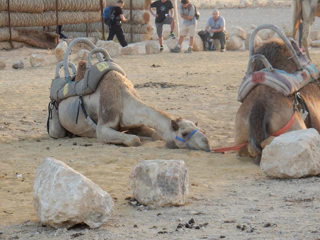 Campamento beduino, Negev,  Road trip, Israel, Elisa N, Blog de Viajes, Lifestyle, Travel
