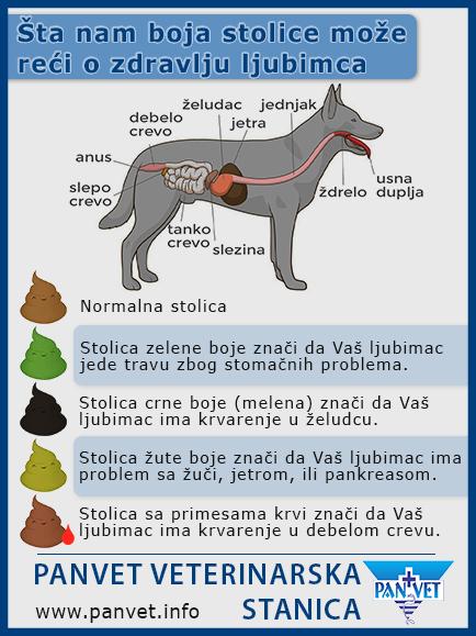 Panvet infografika - izgled stolice kod pasa