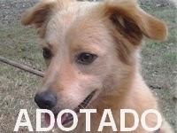 http://oscaesdoparque.blogspot.com.br/2014/07/postagem-r-147.html
