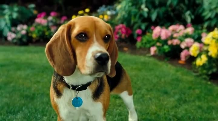 Cats And Dogs  Full Movie In Hindi Download