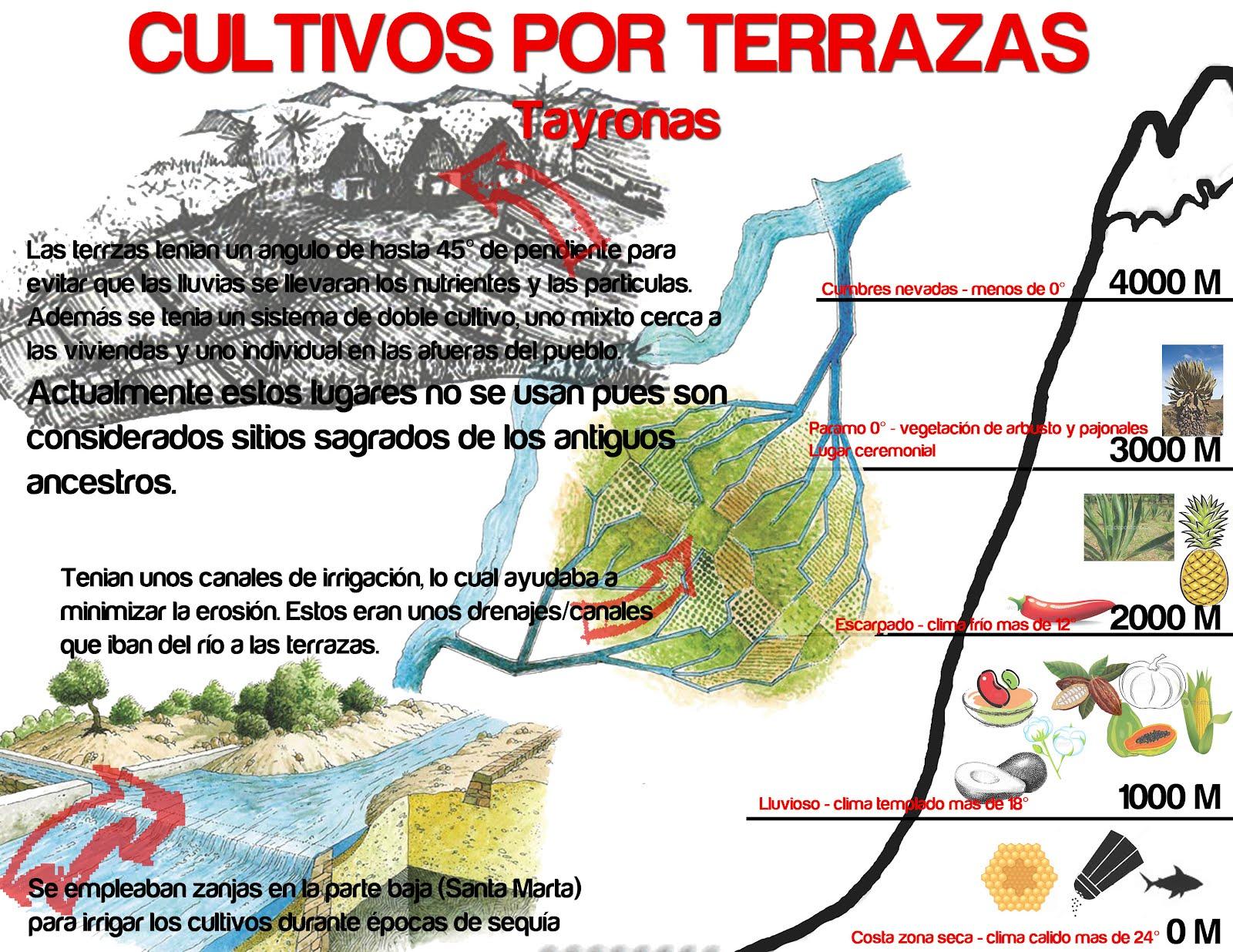 Nuevos Territorios Palomino 2012 Infografía Cultivos Por