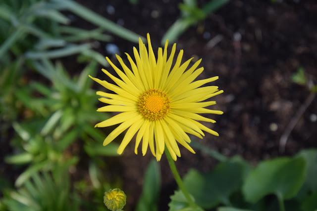 kwiaty wiosna