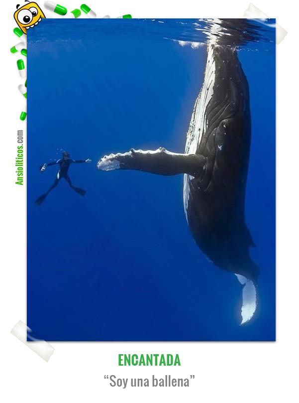 Chiste de Animales de una ballena educada