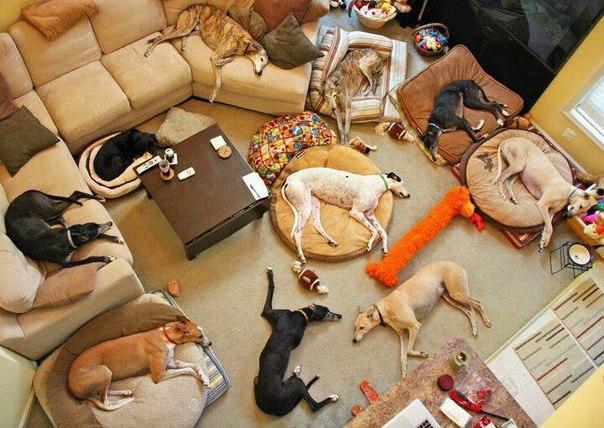 В Уфе женщина содержала 30 собак в «двушке»