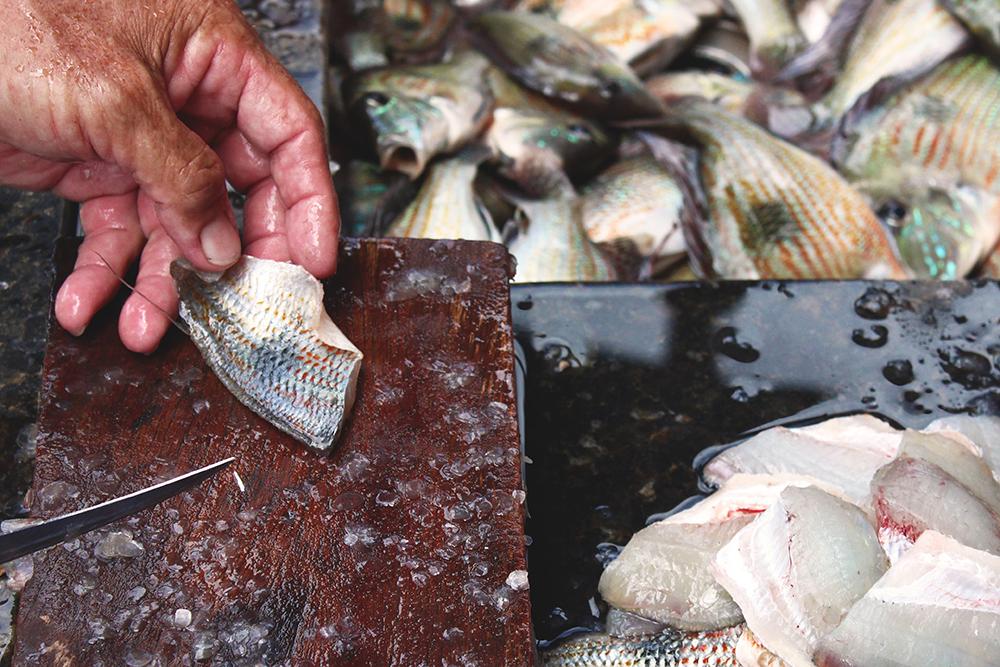 tirando file peixe