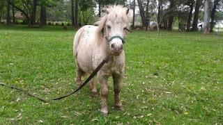 El hombre, que trabaja en la municipalidad de Berazategui, fue visto, a través de las cámaras de seguridad, abusando de un pony.