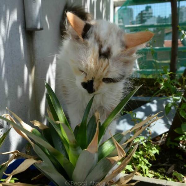 plants cats
