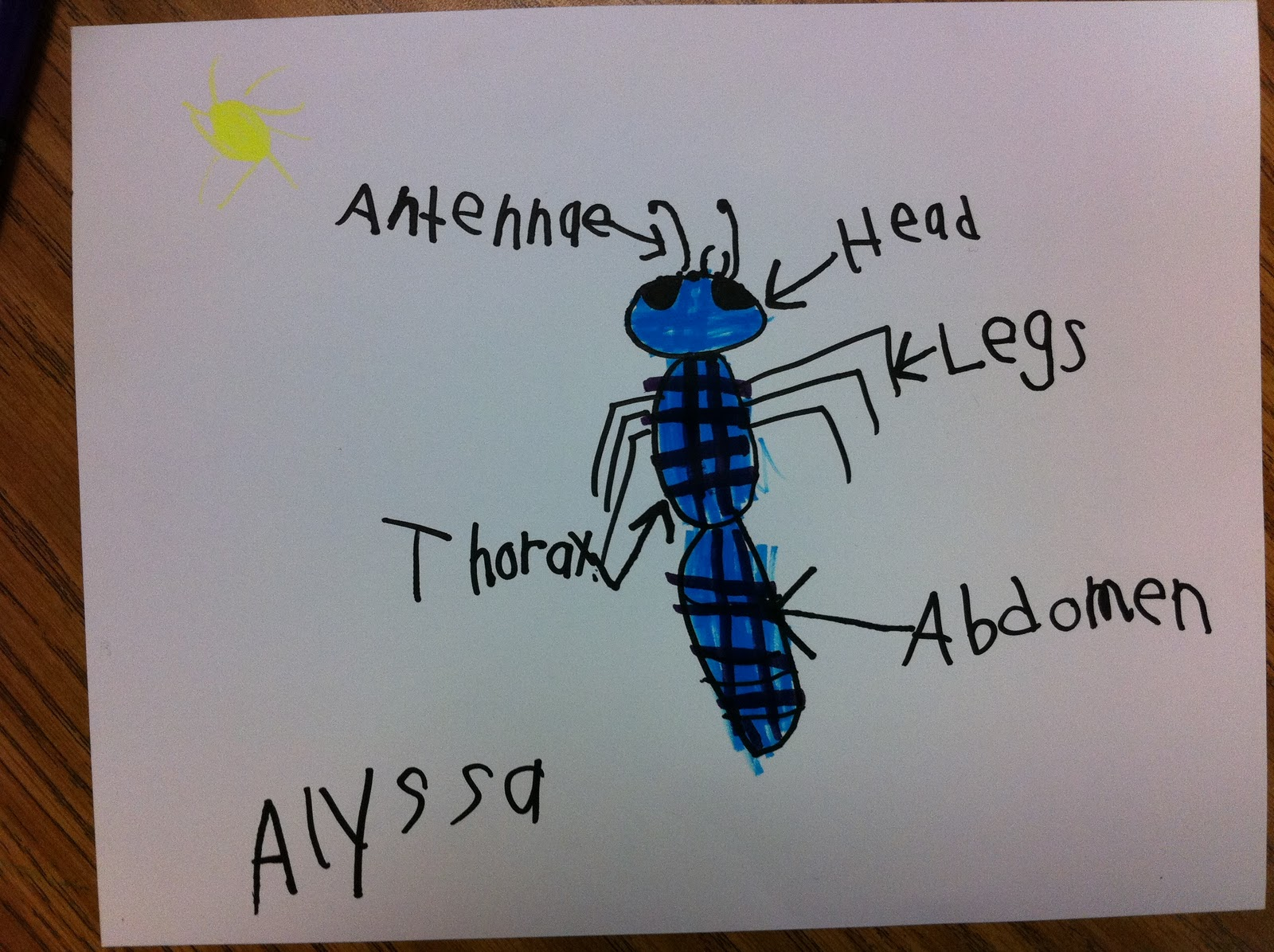 Drawing And Labeling An Insect